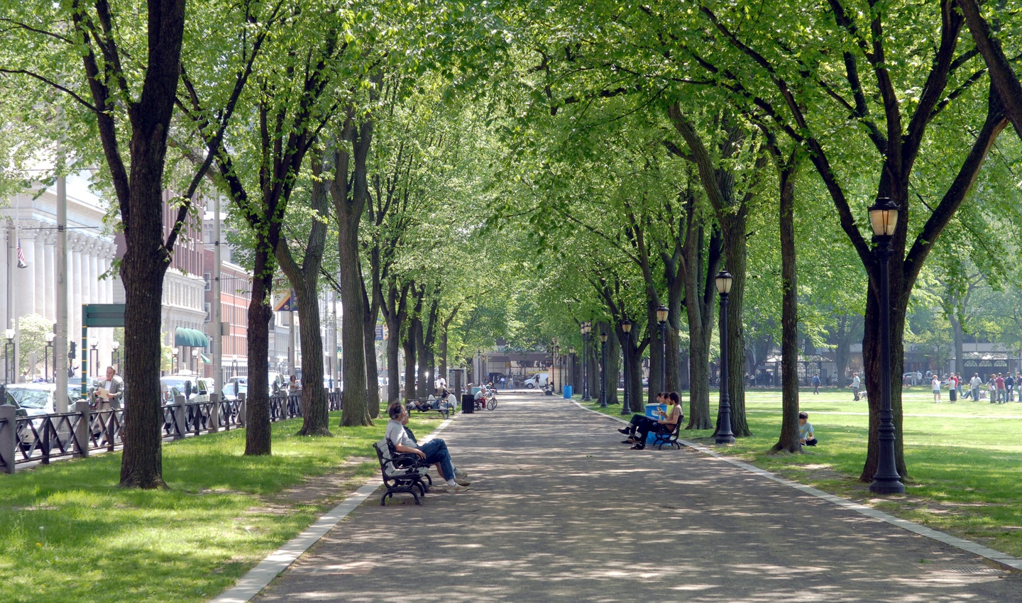 Tree-lined path on New Haven Green